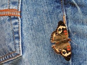 Una mariposa sobre un pantalón vaquero