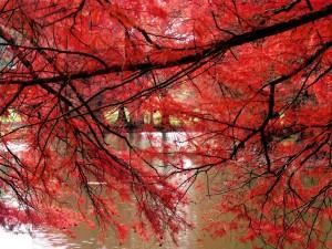 Postal: Ramas rojas