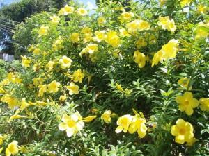 Florecillas amarillas