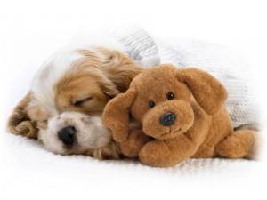 Perrito con su muñeco