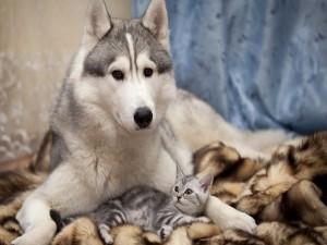 Postal: Perro y gato