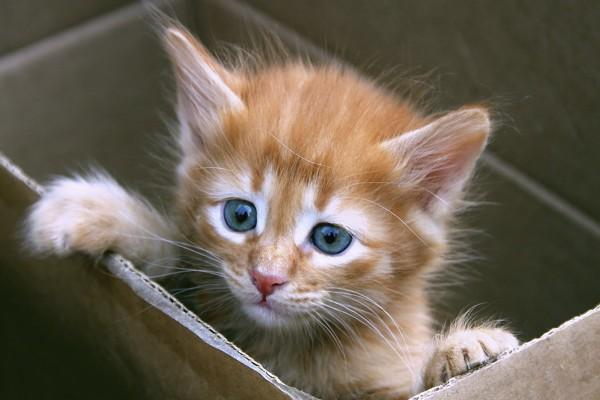 Gatito en una caja