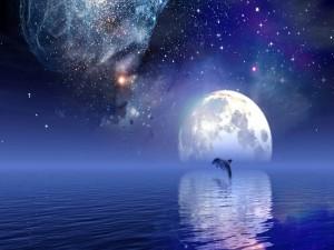 Postal: Delfín bajo un cielo estrellado
