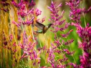 Colibrí entre flores