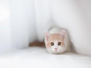 Postal: Un gatito blanco muy atento