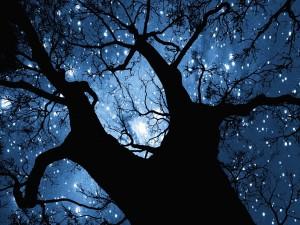 Estrellas entre las ramas de un árbol