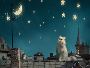 Un gato en el tejado