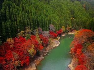 Postal: Río cruzando el bosque