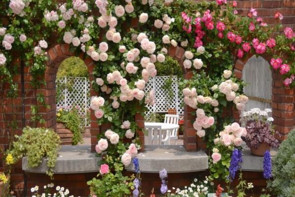 Patio lleno de flores