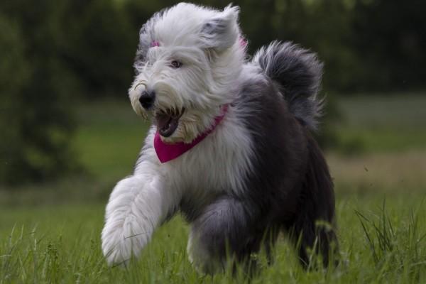 Perrito paseando alegremente sobre la hierba