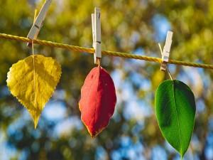 Hojas de colores colgadas con pinzas
