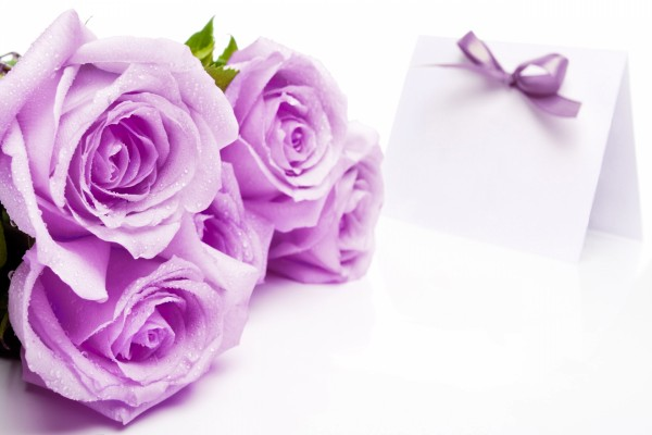 Bonitas rosas color lila