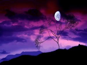 Árbol solitario bajo la luna