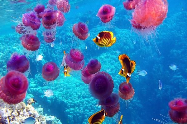 Fondo marino lleno de medusas y peces