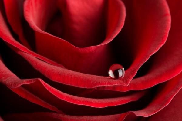 Una gota sobre un pétalo de rosa roja