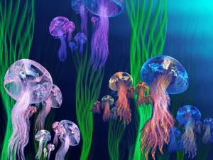 Postal: Medusas de varios colores
