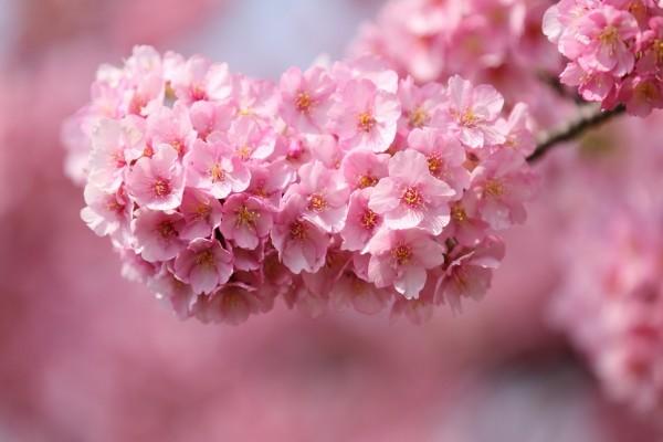 Conjunto de pequeñas flores rosas