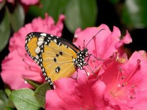 Postal: Mariposa descansando en una flor rosa