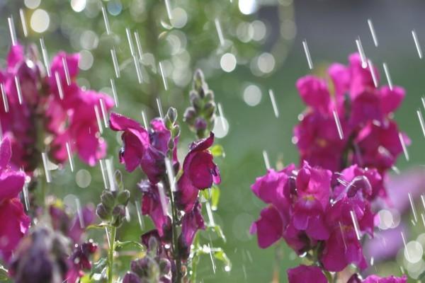 Flores bajo la lluvia