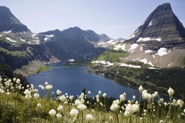Flores blancas en las montañas