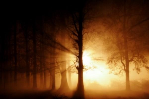 La luz del sol atravesando un sombrío bosque