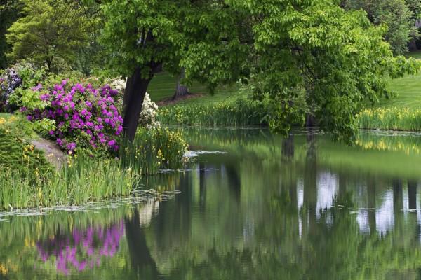 Río entre árboles y flores
