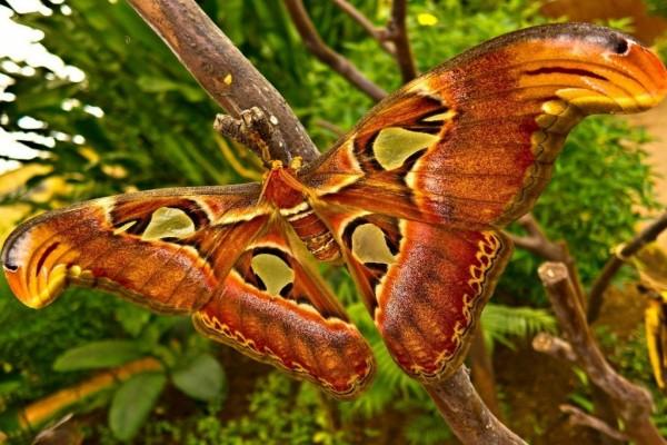 Mariposa gigante en la rama de un árbol