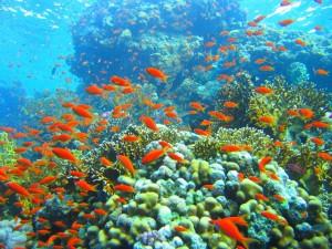 Banco de pequeños peces rojos
