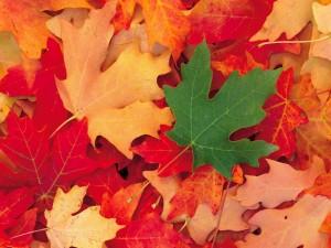 Una hoja verde entre un montón de hojas marchitas