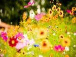 Variedad de flores silvestres