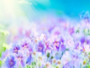 Flores bañadas por la luz del sol