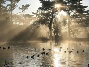 Patos nadando en el agua