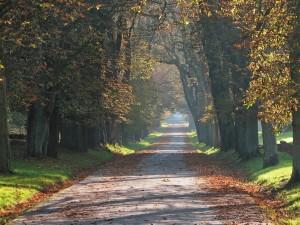 Avenida de los castaños de Indias en un parque de la ciudad de Putbus (Alemania)