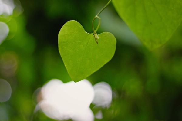 Hoja con forma de corazón