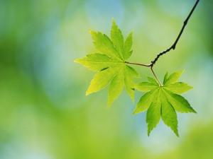 Postal: Dos hojas en su rama
