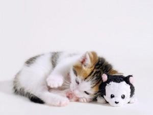 Postal: Gatito con su juguete