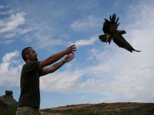 Liberación de un ejemplar de Águila calzada