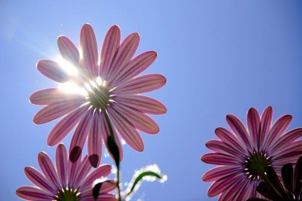 Flor tapando el sol
