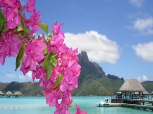 Flores en una playa paradisíaca