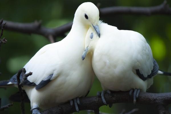 Pajaritos unidos por amor