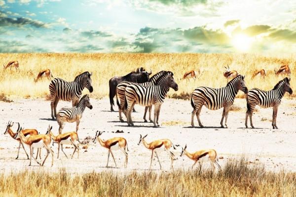 Cebras, búfalos y antílopes en África