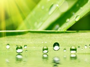 Postal: Perlas de agua sobre una hoja verde