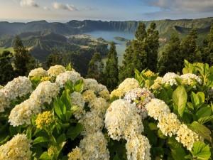 Postal: Hortensias en la Laguna de las Siete Ciudades (Portugal)