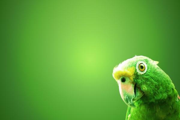 La cabeza de un loro verde