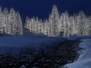 Postal: Muchos árboles de Navidad
