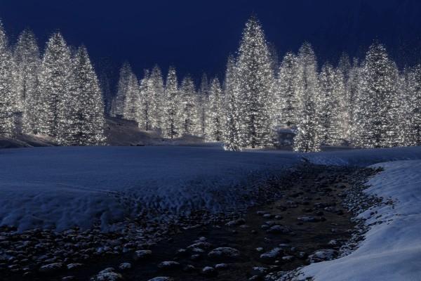 Muchos árboles de Navidad