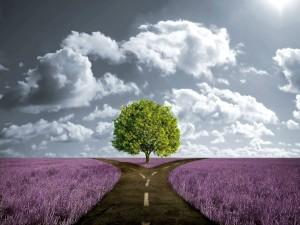 Postal: Árbol entre dos caminos