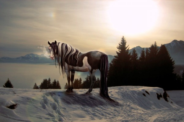 Un hermoso caballo blanco y negro