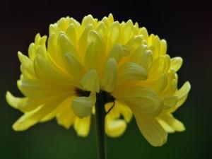 Postal: Una hermosa flor de pétalos amarillos