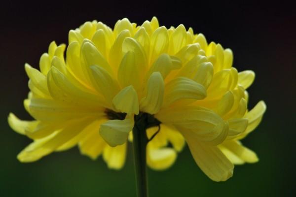 Una hermosa flor de pétalos amarillos